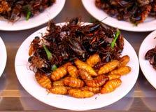 Een plaat van gebraden insecten royalty-vrije stock fotografie