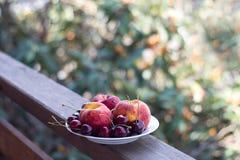 Een plaat van verse vruchten en bessen op een houten tribune en de natuurlijke achtergrond van abrikozenbomen Stock Foto