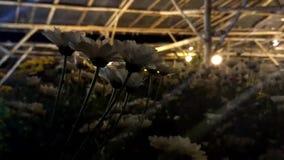 Een plaats aan zorg voor installaties bij nacht Het tuinieren met lichten stock video