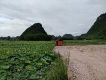Een plaats waar de lotusbloembloemen bloeien stock foto's