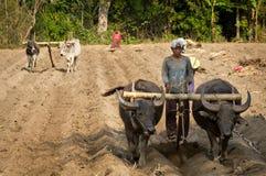 Een ploeg door buffels in Birma &#x28 wordt getrokken die; Myanmar) Stock Foto