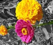 Een plons van kleur Royalty-vrije Stock Foto