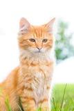 Een pluizig katje kijkt belangrijk! Stock Foto