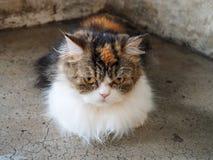 Een Pluizige Kat Royalty-vrije Stock Fotografie