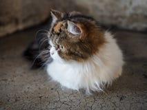 Een Pluizige Kat Royalty-vrije Stock Foto