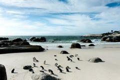 Een pompoen van pinguïn Stock Afbeeldingen