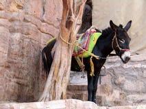 Een poney die langs de klim op Klooster in Petra Jordan rusten Stock Afbeelding