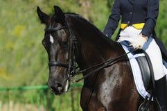 Een portret van dressuurpaard Royalty-vrije Stock Foto
