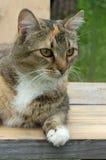Een portret van een huisdierenkat Stock Foto's