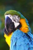 Een portret van een mooie papegaai Royalty-vrije Stock Afbeelding