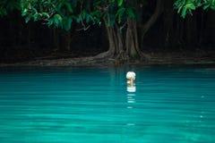 Een portret van het mooie blondevrouw ontspannen in de smaragdgroene pool in tropisch bossra morakot, Krabi, Thailand royalty-vrije stock fotografie
