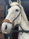Een portret van een paard die zich in de stal bevinden stock foto's