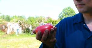 Een portretkerel, een landbouwer in een strohoed, een werkende robe neemt een tomaat op stock video