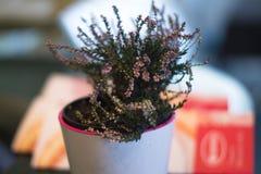 Een pot in een pot in een koffie met een vage achtergrond Stock Fotografie