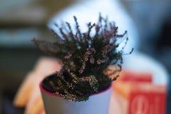 Een pot in een pot in een koffie met een vage achtergrond Stock Foto's