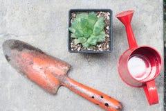 Een pot van cactus met rode het water geven pot op houten lijst Royalty-vrije Stock Foto