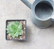 Een pot van cactus op concrete achtergrond Royalty-vrije Stock Afbeeldingen
