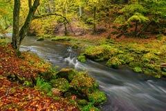 Een prachtig bos van de rivier stromend herfst stock foto