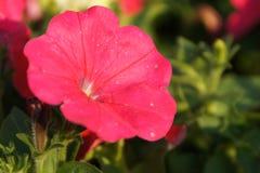Een prachtige rode bloem in Tainan Taiwan royalty-vrije stock fotografie