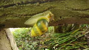 Een prachtige slak die ik nooit heb gehad voordien zien stock afbeelding