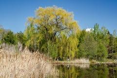 Een promenade in de bomen bij de Botanische Tuin van Montreal Royalty-vrije Stock Foto's