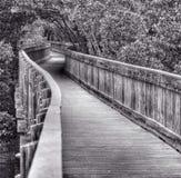 Een promenade die tussen bomen winden Stock Foto's