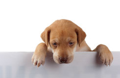 Puppy op de omheining Stock Fotografie