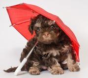 Een puppy onder de paraplu stock fotografie