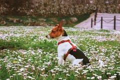 Een puppy op het gebied Royalty-vrije Stock Foto