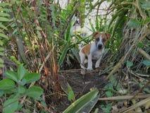Een Puppy speelt in een Groene Tuin Royalty-vrije Stock Fotografie