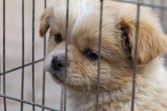 Een puppy voor verkoop die zich over zijn toekomst ongerust maken royalty-vrije stock foto's