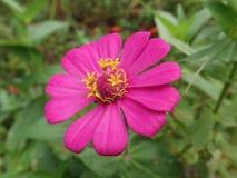 Een purpere bloem stock foto's