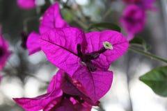 Een purpere bloem onder aard royalty-vrije stock afbeelding