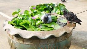 Een purpere lotusbloem en een vogel stock footage