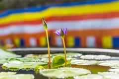 Een purpere lotusbloembloem en een Boeddhistische vlag in Chiang Mai, Thailan Stock Afbeelding