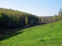 Een ravijn door bos wordt omringd dat Stock Fotografie