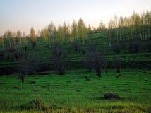 Een ravijn door bos wordt omringd dat Stock Foto