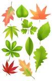 Een reeks bosbladeren Stock Afbeelding