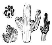 Een reeks cactusschetsen royalty-vrije illustratie