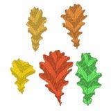 Een reeks eiken bladeren Royalty-vrije Stock Foto
