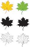 Een reeks esdoornbladeren Stock Afbeeldingen