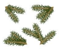 Een reeks Kerstboomtakken Royalty-vrije Stock Fotografie