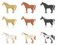 Een reeks paarden van verschillende rassen en kleur Stock Foto