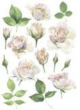 Een reeks rozen voor uitnodigingen royalty-vrije illustratie