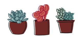 Een reeks succulente tekeningen Stock Afbeelding
