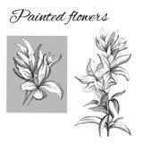 Een reeks van contour van vectorbloemen Schets van een bloem door inkt wordt getrokken die Clipartoverzicht voor gebruik in ontwe vector illustratie