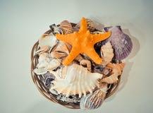 Een reeks van verschillende zeeschelpen en zeester in een mand Stock Foto's