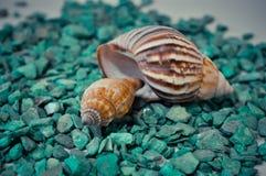 Een reeks verscheidene verschillende shells op groene stenen Royalty-vrije Stock Foto