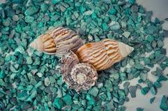 Een reeks verscheidene verschillende shells op groene stenen Royalty-vrije Stock Afbeeldingen