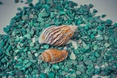 Een reeks verscheidene verschillende shells op groene stenen Stock Afbeeldingen